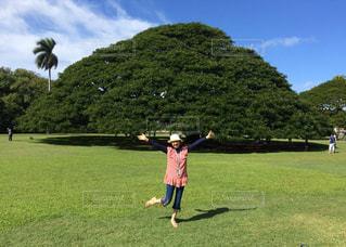 この木なんの木気になる木!の写真・画像素材[2049421]