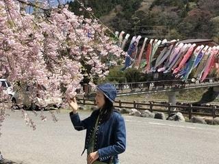 桜と鯉のぼりが一緒に見れますの写真・画像素材[2100047]