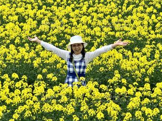 菜の花に埋もれるの写真・画像素材[2154411]