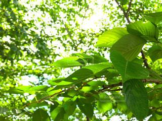 木の下の写真・画像素材[2114054]