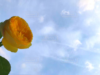空と黄色の花の写真・画像素材[2117250]