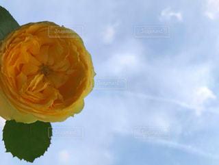 空と黄色の花の写真・画像素材[2117251]