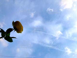空と黄色の花の写真・画像素材[2117254]