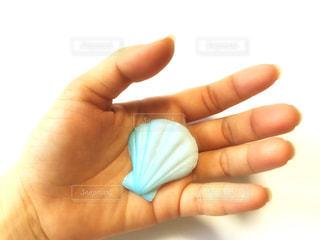 手と貝の写真・画像素材[2141203]