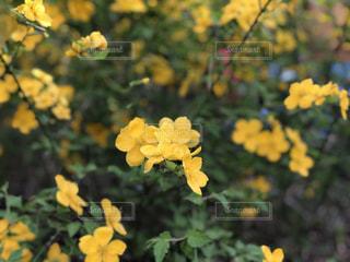花の写真・画像素材[2077351]