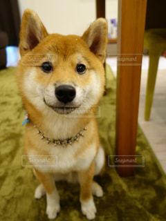 犬の写真・画像素材[1966848]