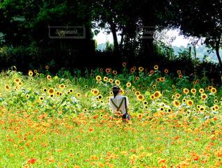 お花畑にての写真・画像素材[1973158]