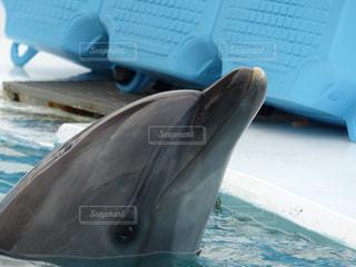 イルカの笑顔の写真・画像素材[1981648]