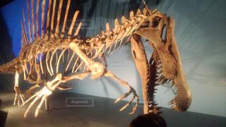 スピノサウルスの写真・画像素材[2000656]