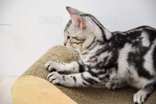 ネコの爪研ぎの写真・画像素材[1968322]