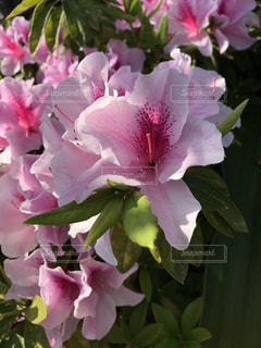 花の写真・画像素材[1970224]