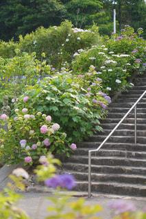 花園の写真・画像素材[2231012]