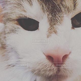 猫のまーくんの写真・画像素材[3381688]
