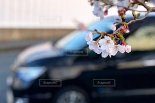 桜の写真・画像素材[1968940]