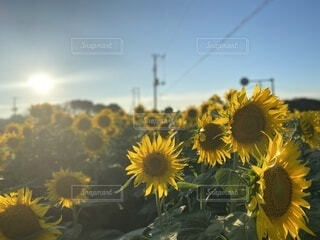 夏の終わりの写真・画像素材[3694943]