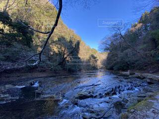 森を流れる川の写真・画像素材[4081673]