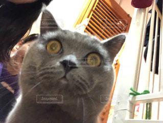 猫の自撮りの写真・画像素材[1978701]