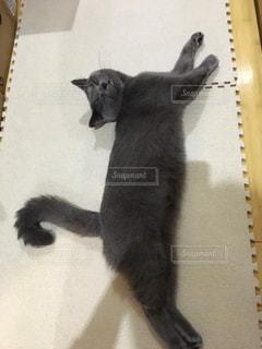 のびている猫の写真・画像素材[1989523]