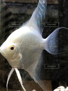 魚の接写の写真・画像素材[2113970]