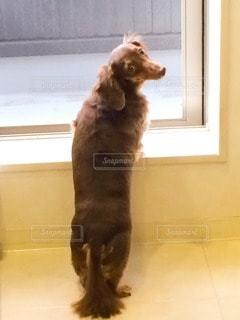 犬 - No.74030