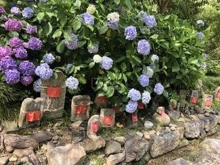 紫陽花とお地蔵様の写真・画像素材[2004760]