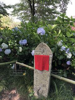 紫陽花とお地蔵さんの写真・画像素材[2004763]