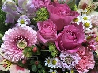 花の写真・画像素材[1970089]