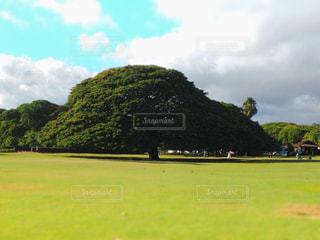 ハワイの写真・画像素材[1995003]