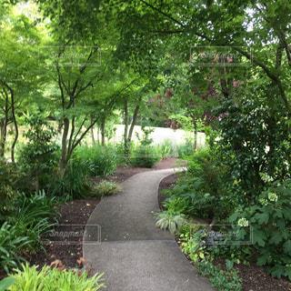 木々や茂みに囲まれた小道の写真・画像素材[2139943]