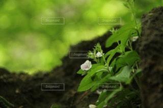 自然の写真・画像素材[75033]