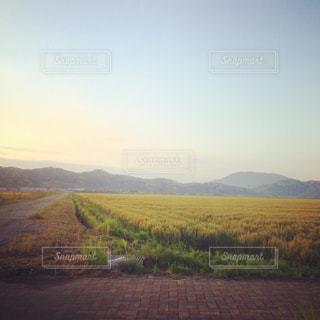 麦畑と遠くの山 - No.750659