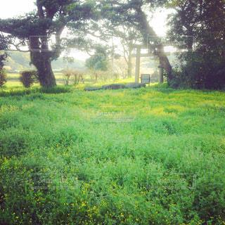 黄色い絨毯の草の写真・画像素材[750662]