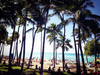 Waikiki Beachの写真・画像素材[1981013]