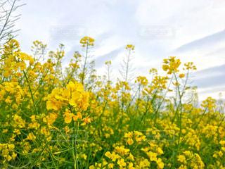 咲き乱れるの写真・画像素材[2074427]