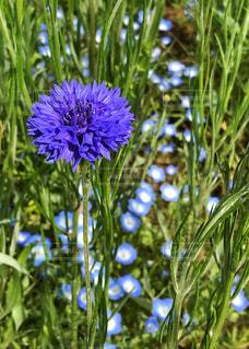 春の花畑の写真・画像素材[2076480]