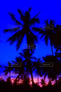 ヤシの木の写真・画像素材[2012933]