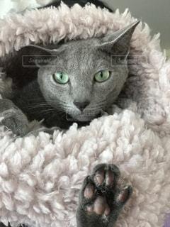 猫の接写の写真・画像素材[2176010]