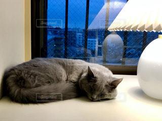出窓に横たわっている猫の写真・画像素材[2176016]