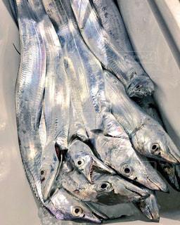 タチウオ大漁!の写真・画像素材[1973657]
