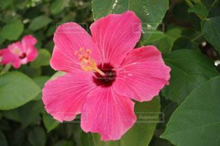 花の写真・画像素材[2010108]