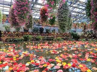 花の写真・画像素材[2010740]