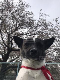 犬の写真・画像素材[1975513]