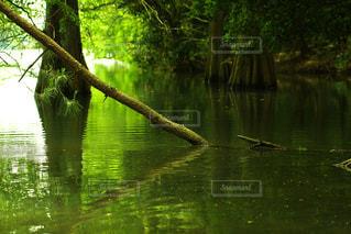 自然の写真・画像素材[137156]