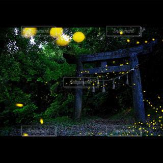 黄色の写真・画像素材[618007]