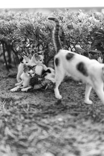 地面に横たわっているネコの写真・画像素材[725256]