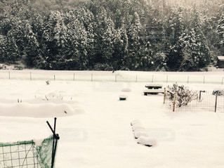 大雪の朝!の写真・画像素材[2002068]