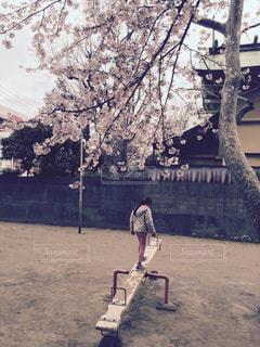 春は一瞬にして終わりますの写真・画像素材[2003011]