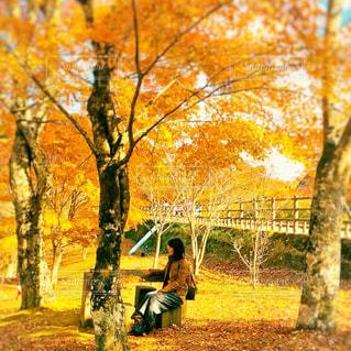 紅葉と一休みする女性の写真・画像素材[2083753]