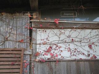 ツタの絡まる古民家の写真・画像素材[2083552]