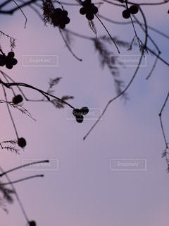 冬空のミッキーマウスの写真・画像素材[2721323]